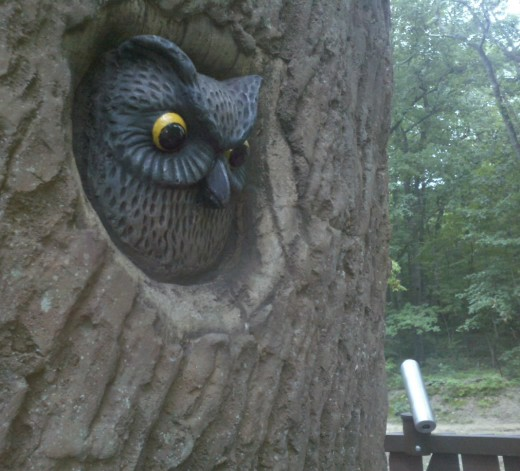 This owl is a treasure to find in this treasure of a playground.