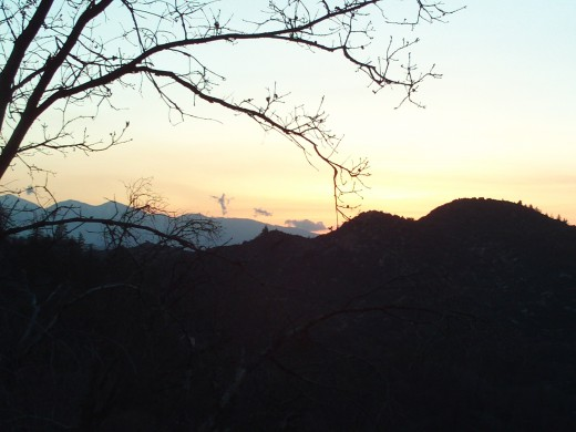 Mount Baldy in the distance with trees at sunset.