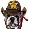 Big Mr Bulldog profile image