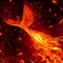Like a Phoenix:  A Poem