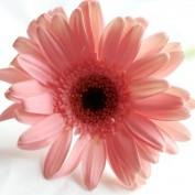 jyoti2929 profile image