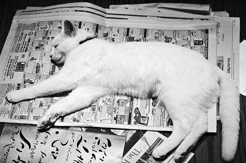 A comfortable cat enjoying a newspaper of the larger size.