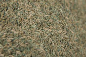 This dead grass looks awful on any lawn. Doing the lawn repair yourself, will save you money and give you a sense of accomplishment.