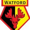 Watford110 profile image