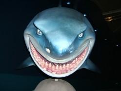 Shark Attack Shark Attack- Byron Bay honeymoon