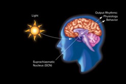 Circadian Rhythms and Endocrine Disruptors