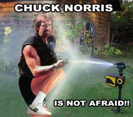 Chuck Norris vs The Scarecrow Sprinkler