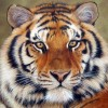 kyawlinnyein profile image