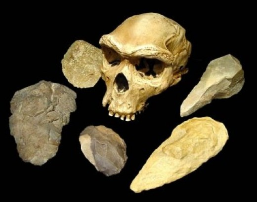 articles of physical anthropology