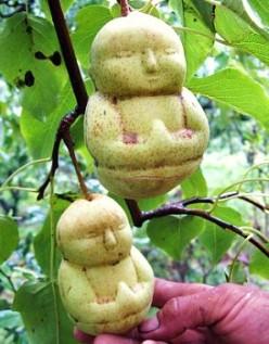 Buddha, Guy de Maupassant & Fruit That's Shaped Like People