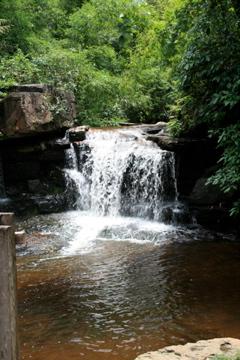Tea Farm Waterfall