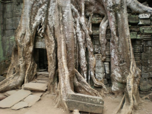Ta Prohm,Temples of Angkor, Cambodia