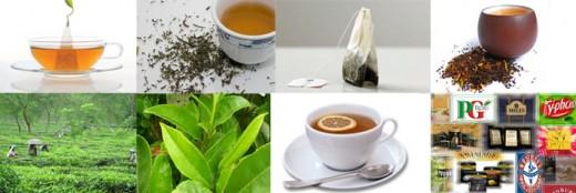 world of tea