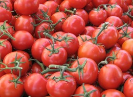 Tomatoes retain the most flavor when stored at room temperature.