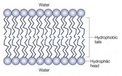 Cell Structure: Study Guide