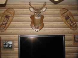 The wallpaper in our tv room - notice the tv in the foreground.