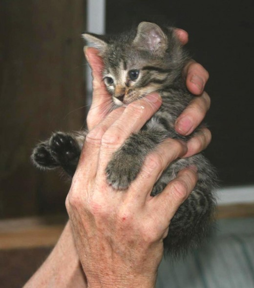 I am holding litle Frisky, a rescued kitten.