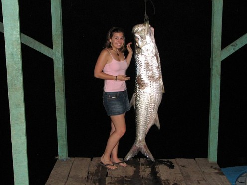 A fish caught in Tortuguero National Park