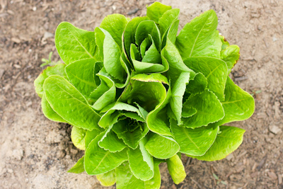 Organic lettuce costs just a little more but makes for a much cleaner salad.
