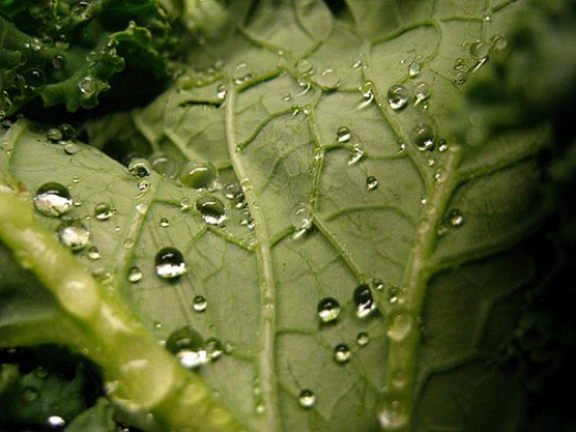 Kale is a hardy leafy green, but farmers have increased the number of pesticides used to keep away the bugs in the last few years.
