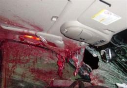 Deer Wreck - Front Seat