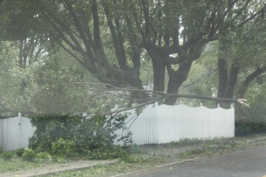 large branch resting on wire! crazy a lot of wires are still hot! perfect example of why you need to be careful!