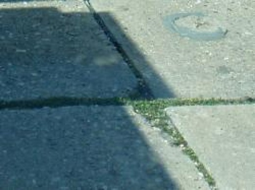 Look at how green the grass is in the Street Crack !