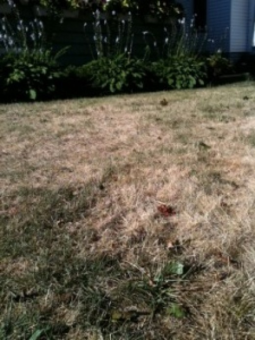 This picture looks just like my Dry Summer Grass that is turning brown...brown...dead !