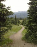 Pathway through the Alpine Meadow. Manning Park, BC Canada