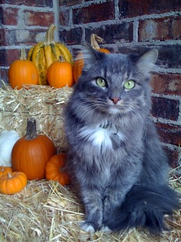 Am I wrong to insist that Binx love pumpkins as well?  I think not.