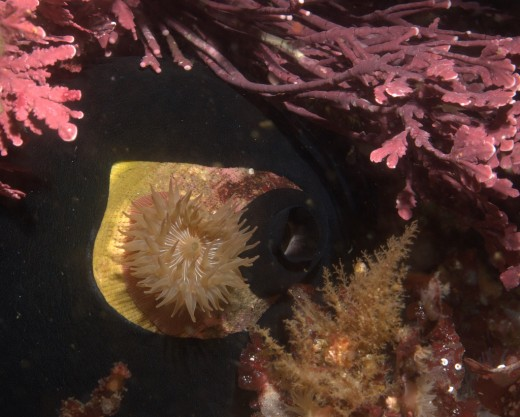 Hitchhikers - Other sea creatures hitch rides on limpets.