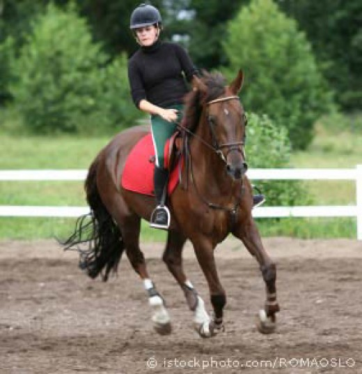 A rider flexes the horse to the right to correct stiffness on its right side