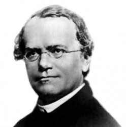 """Gregor Mendel, the humble Austrian monk and scientist who first inferred patterns of inheritance.  """"Common garden"""" experiments were a staple technique for him, as for Dr. Weis."""