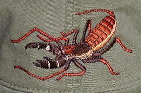 The Vinegaroon (Imitates a  true scorpion)