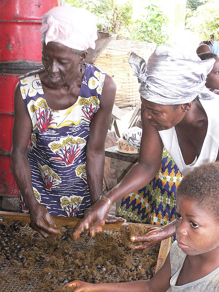 Sorting fiber and nuts from the oil palm in Ghana.  Image courtesy MartinH and Wikimedia Commons.