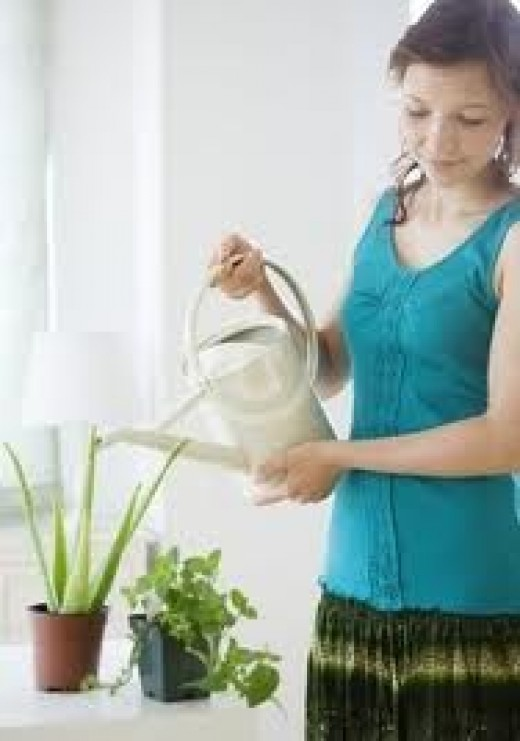 Watering your house plant is essential for its  growth!