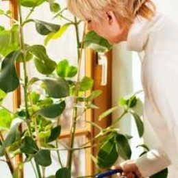 I cannot stress too much how important it is to keep your house plant watered!  Remember to water your house plants!