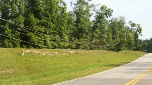 Thousands of people lost power because of fallen trees on power lines.