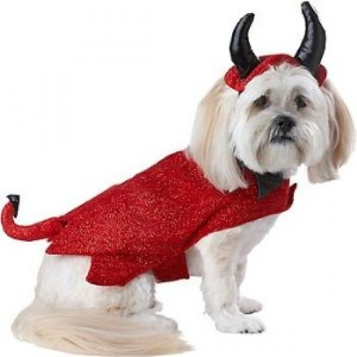small dog costume with easy velcro closures