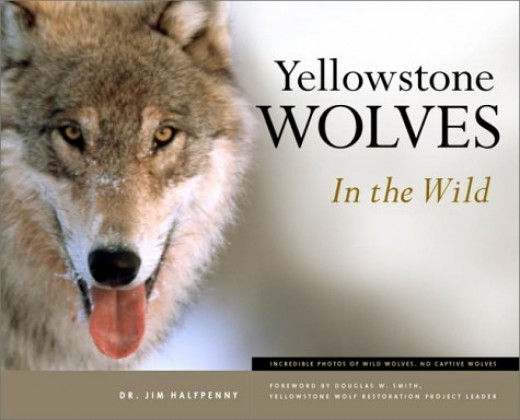 """Yellowstone Wolves in the Wild"" by James C. Halfpenny"