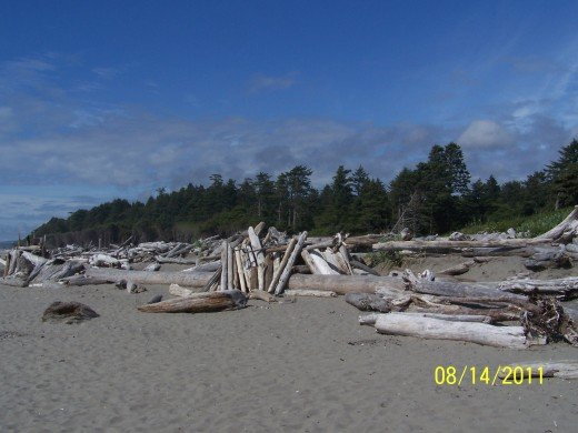 DRIFTWOOD IS ON DISPLAY AT KALAKOCH BEACH