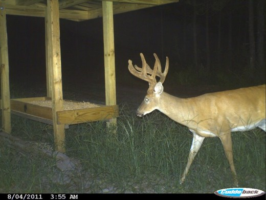 A trail camera works well near a feeder or food plot.