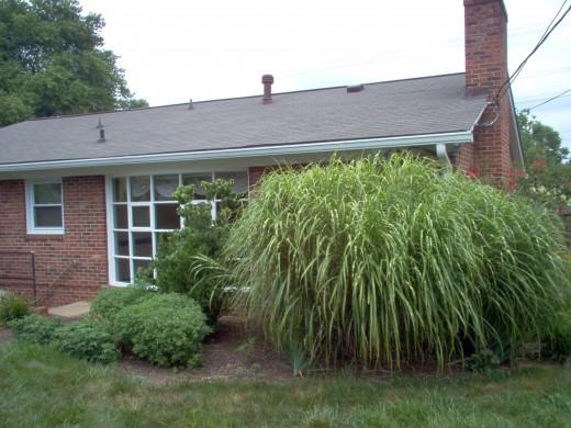 The back yard - July 2006.