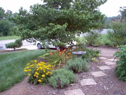 The walk to the driveway - July 2006.