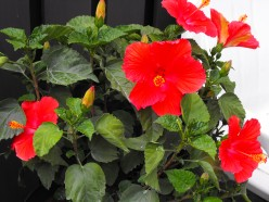 What are the Best Indoor Plants