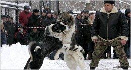 East Europe dogfighting (www.game-dog.com)