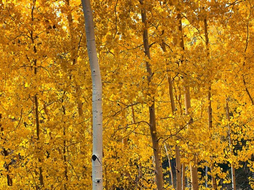 Drive in Colorado for Fall Colors. The changing of the Aspens offers spectacular views statewide.