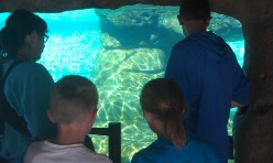 Watching marine animals in the outdoor aquarium exhibits from below surface