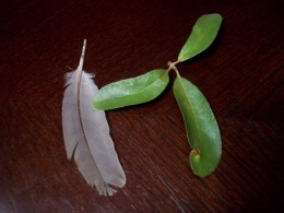 Feather and Triple Goddess Leaves - Free!