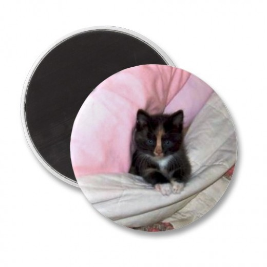 Muffin the kitten features on many cards and gifts on my zazzle.store